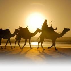 fezdaytrips travel agency