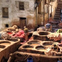 tannery Chouara, fez, Morocco